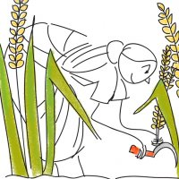 Illustrated Story of Paddy: Sree Gopal Rice Mills